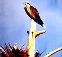 Osprey Nesting by Daneann