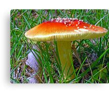 *Amanita muscaria* Canvas Print
