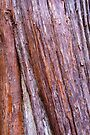 Bark 7 by Werner Padarin