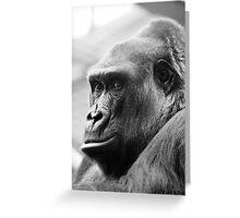 Zaire Western Lowland Gorilla Greeting Card