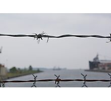 Barbed lakeside Photographic Print