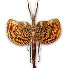 Bug 02 by Ronald Eller