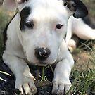 Penelope Puppy by nosajnybor