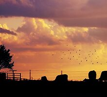 The Birds and The Cows by dangrieb