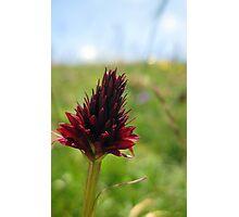 Mountain flower Photographic Print