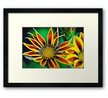 Orange and Yellow Stripes Flower Framed Print