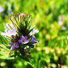 Tiny Flowers by Mirafaye