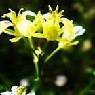 Yellow Flowers by Mirafaye