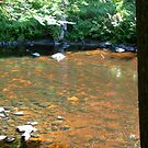 Morning sun shine on creek by linmarie