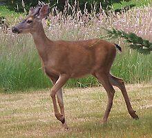 Buck On The Move by Jonice