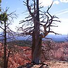 Lone Pine by justcruzin