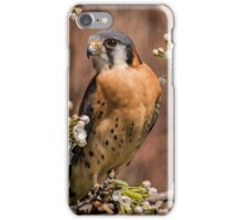 American Kestrel iPhone Case/Skin