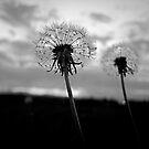 I Wish..... by Pamela Hubbard