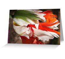 ragged tulip Greeting Card
