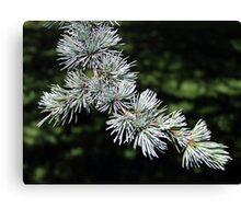 Pine Needles Canvas Print