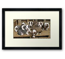 The Gang's All Here Framed Print