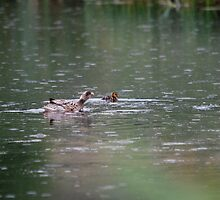 mrs what duck by dougie1