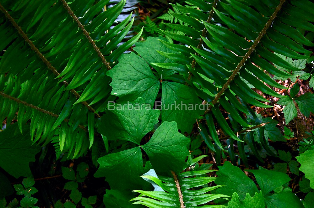Natures Arrangement by Barbara Burkhardt