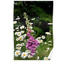 Spring Time Wild Flowers - Washington State Poster