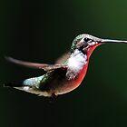 Wildlife 2011 by Bill Miller