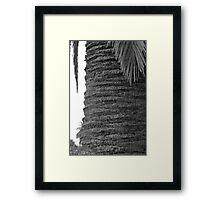 Palmy Accordion Framed Print