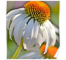 Summer Coneflowers Poster