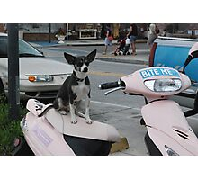 Puppy Moped  Photographic Print