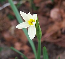 First signs of spring by Lynelle