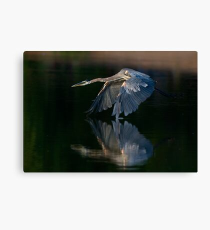 062409 Great Blue Heron Canvas Print