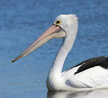 Pelican by beerman70