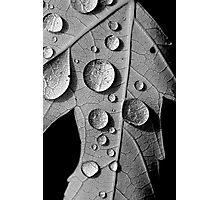 Maple Drops Photographic Print