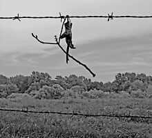 Caught on the Wire by g richard anderson