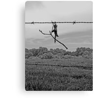 Caught on the Wire Canvas Print