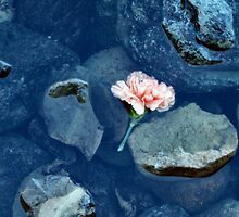 Cast Away - Single Carnation by M Sylvia Chaume