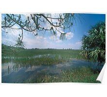Natural wetland Poster