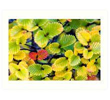 Autumn Fagus, Labyrinth, Tasmania Art Print