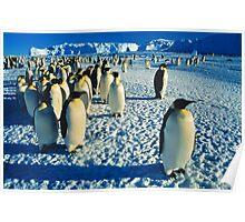 Emperor Penguins, Auster Rookery, Antarctica Poster
