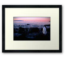 Adelie Sunset, Antarctica Framed Print
