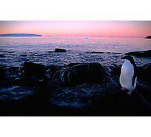 Adelie Sunset, Antarctica Photographic Print