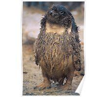 Hippy Penguin, Antarctica Poster
