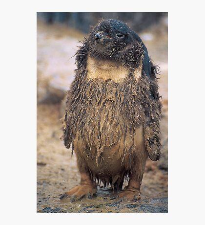 Hippy Penguin, Antarctica Photographic Print