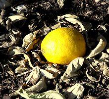 citrus by RamonaJean