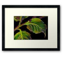 'Burnished Leaves' Framed Print