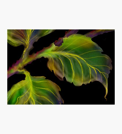 'Burnished Leaves' Photographic Print