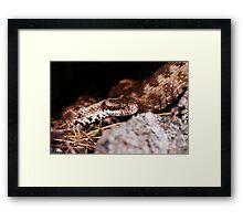 Viper #2 Framed Print