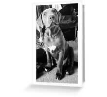 gorgeous pitty Greeting Card