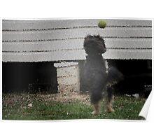 Play Full Dog Poster