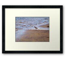 Beach Comber Framed Print