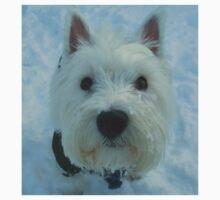 A Westie posing in the snow. by albutross