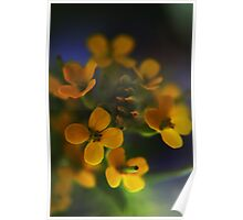 Yellow Wreath (from wild flowers collection) Poster
